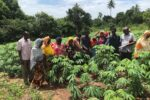 Kilimo Joint with Farmers