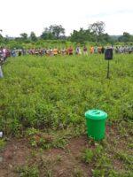 Ghana field day