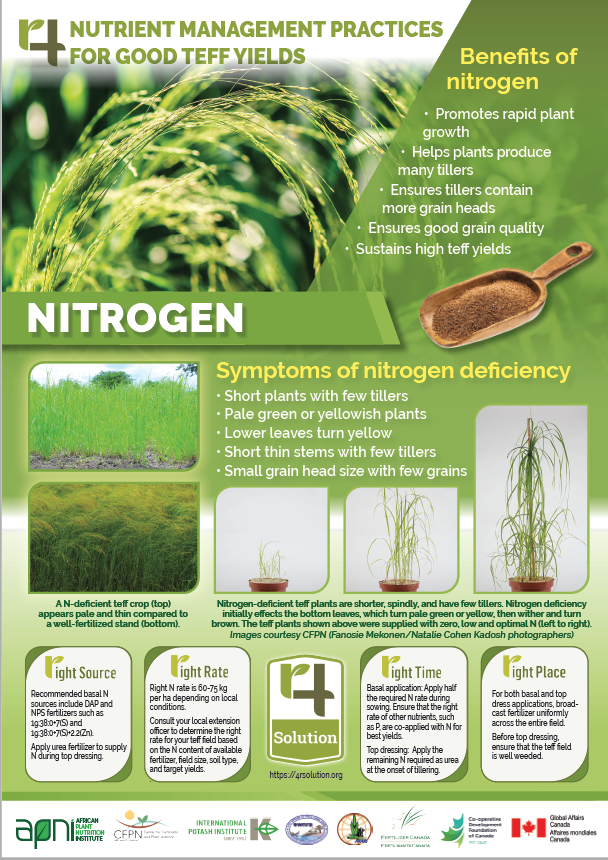 4R Nutrient Management Practices for Good Teff Yields - Nitrogen Image