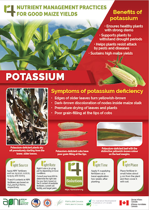 4R Nutrient Management Practices for Good Maize Yields - Potassium Image