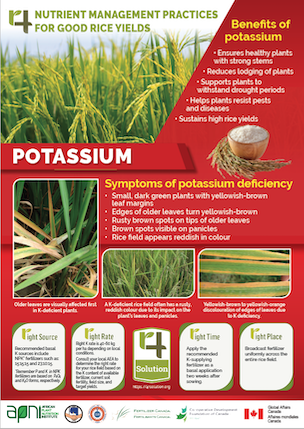 4R Nutrient Management Practices for Good Rice Yields - Potassium Image