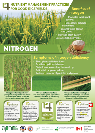 Poster: 4R Nutrient Management Practices for Good Rice Yields - Nitrogen Image