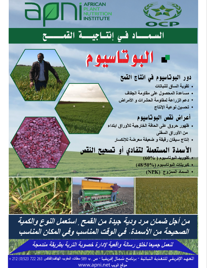 Potassium Fertilizer Management for Wheat Image