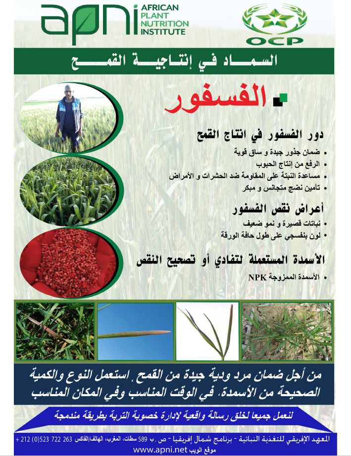 Gestion des engrais au phosphore pour l'image du blé