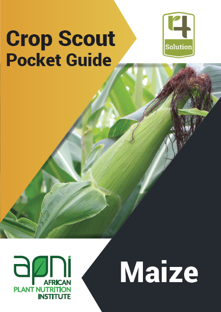 Crop Scout Pocket Guide: Maize Image
