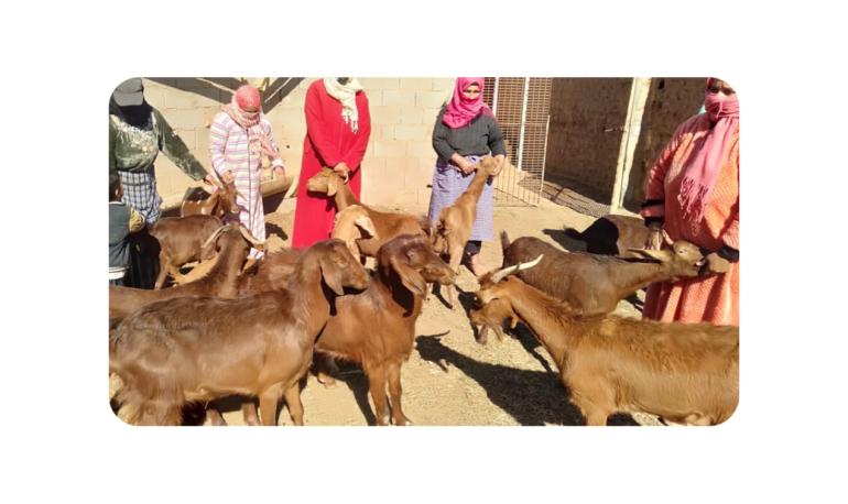 Morocco goats slide