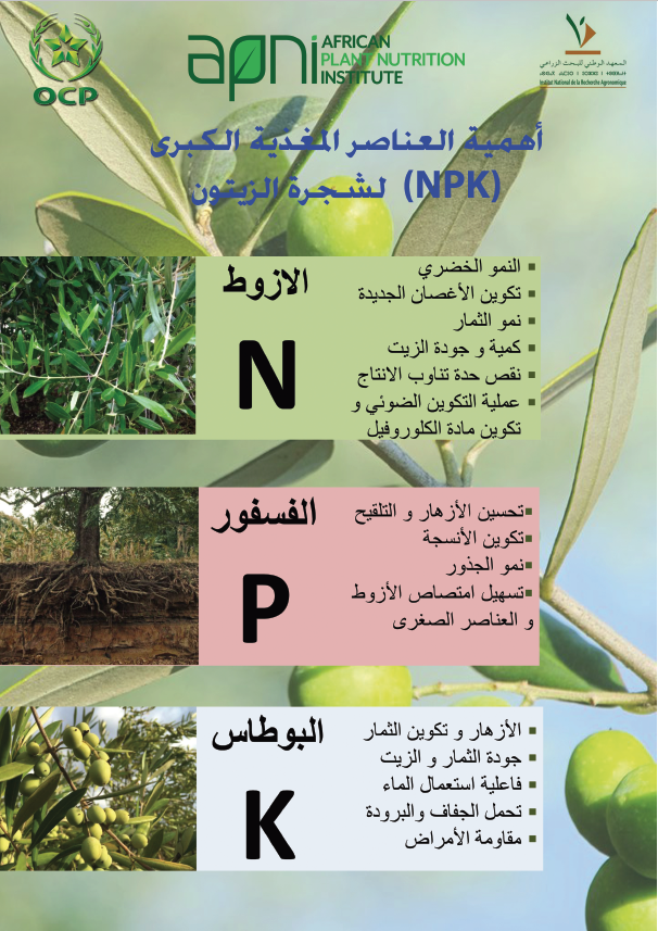 Macronutrient nutrition of olive Image