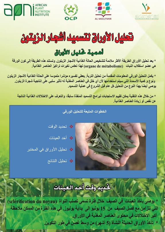 تحليل الأوراق لتسميد أشجار الزيتون (Foliar Sampling Methods for Olive) Image