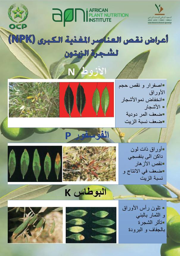 NPK deficiency symptoms in olive Image