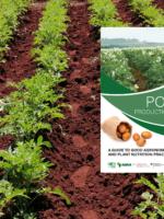 Kenya Potato